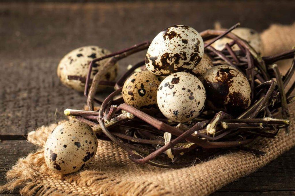 перепилині яйця корисні властивості