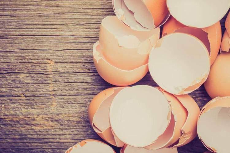 Яєчна шкаралупа корисні властивості